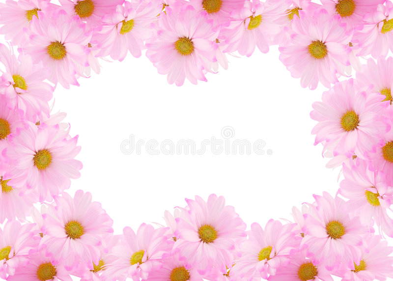Daisy background. Pink daisy background or border for greeting card stock photo