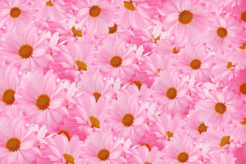 Daisy background stock photo
