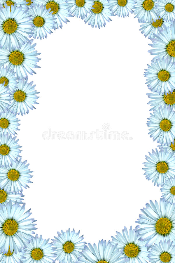 Daisy background. Beautiful daisy background yellow and white stock images