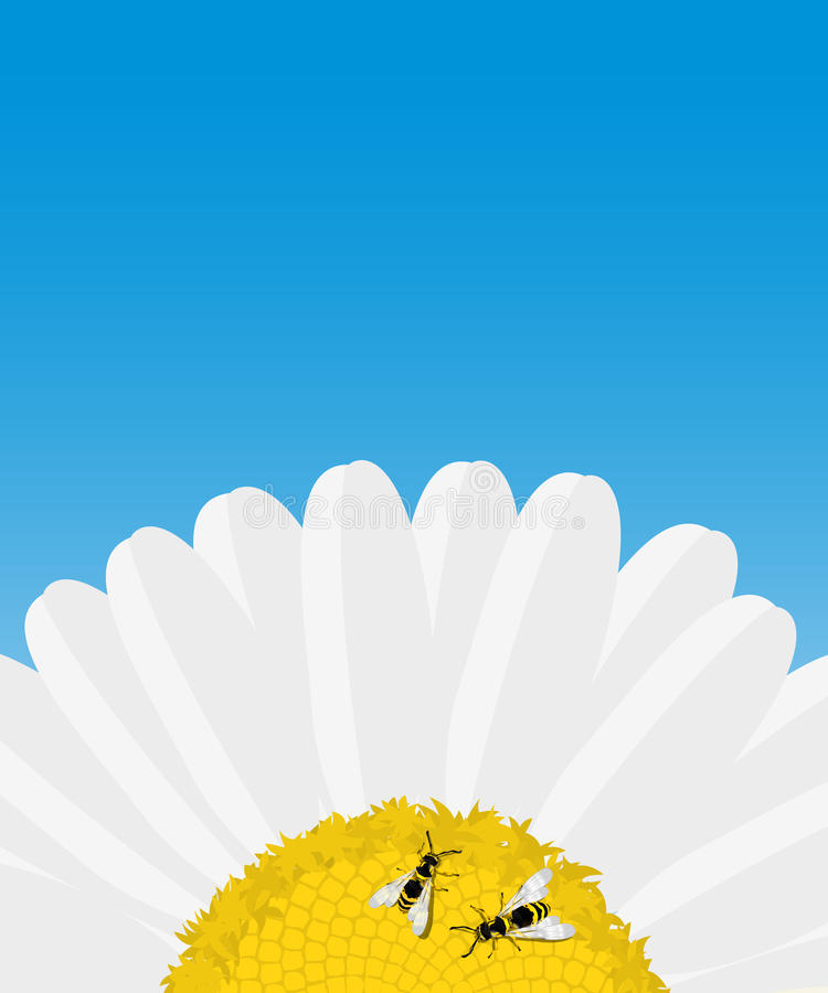 Daisy and bees card royalty free illustration