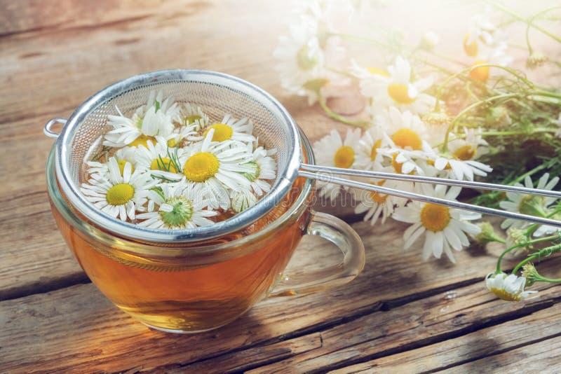 Daisy bloemen in thee infuser en de gezonde kop van het kamilleaftreksel royalty-vrije stock fotografie