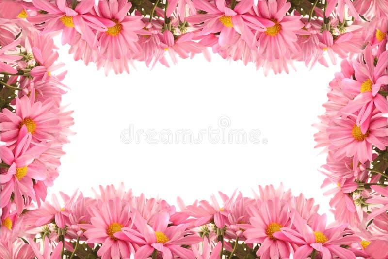 Daisy border or frame stock image