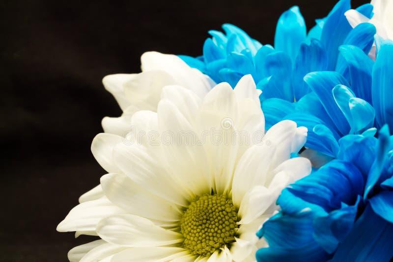 Daisy bouquet royalty free stock photo