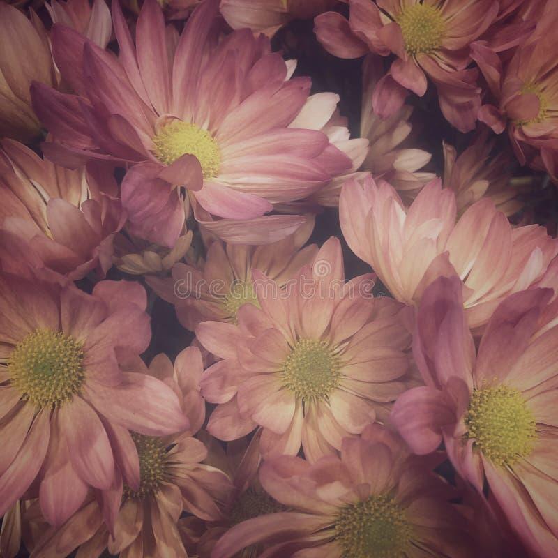 Daisy image stock