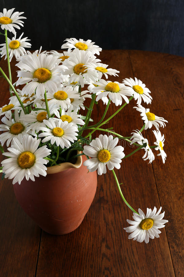 Daisy Bouquet en fleurs de Brown Clay Vase Dark Background White photos libres de droits