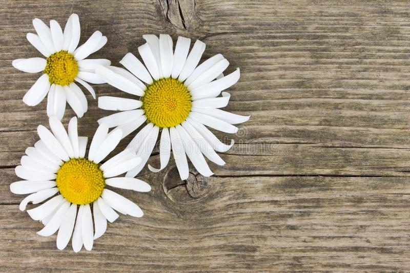 Daisy camomile flowers on wooden table background with copy space. royalty free stock photography