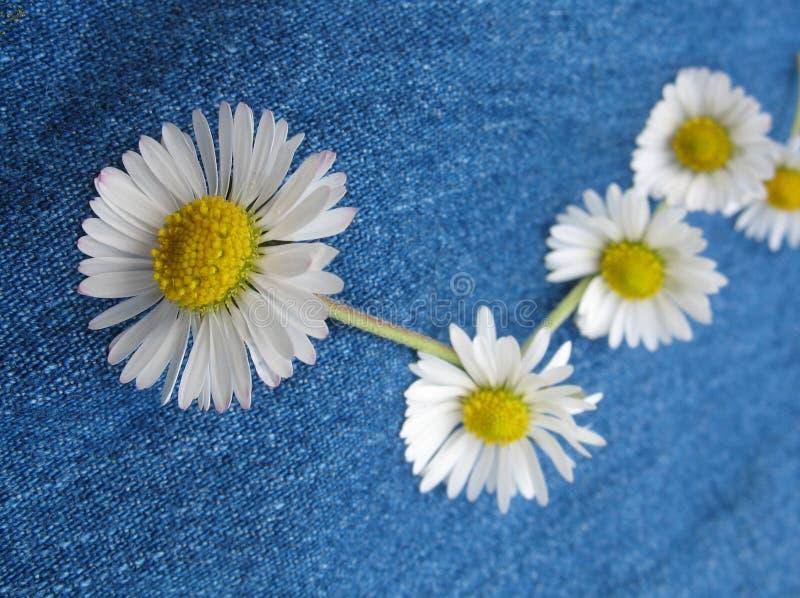 Free Daisy Chain Royalty Free Stock Image - 844356