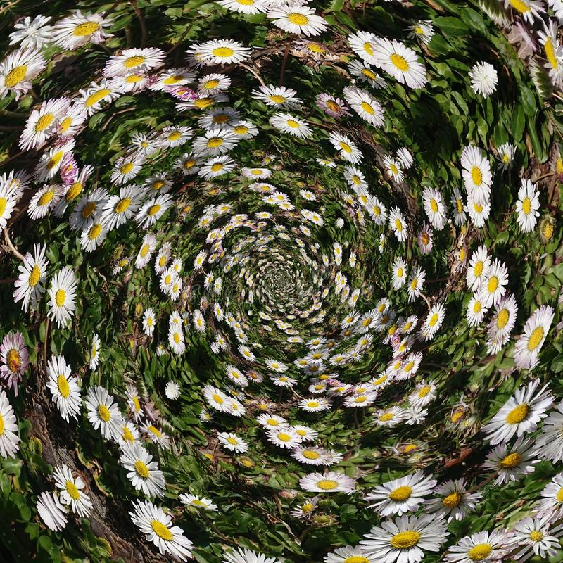 Free Daisy Chain Flowers Abstract Background Stock Images - 168304204