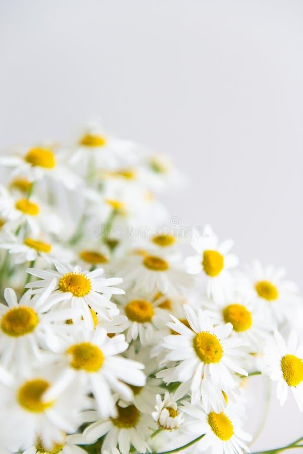 Daisy chamomile bouquet su fondo bianco Fiori estivi Messa a fuoco selettiva Chiudi, copia spazio fotografia stock libera da diritti