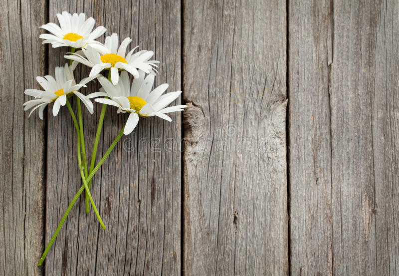 Daisy chamomile flowers. On wooden background. View with copy space royalty free stock image