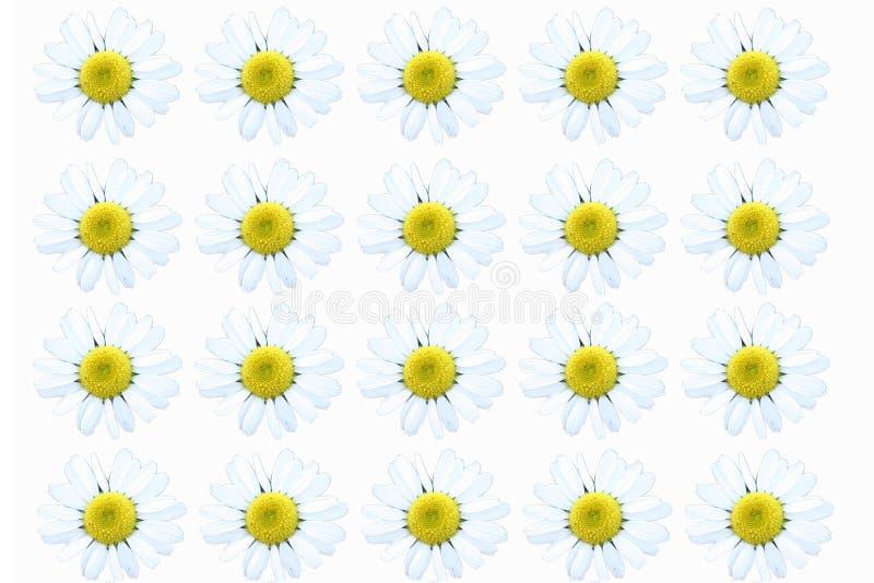 Daisy Daisy royalty free illustration