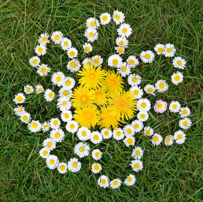 Download Daisy And Dandelion Flowers Composition Royalty Free Stock Image - Image: 24876156