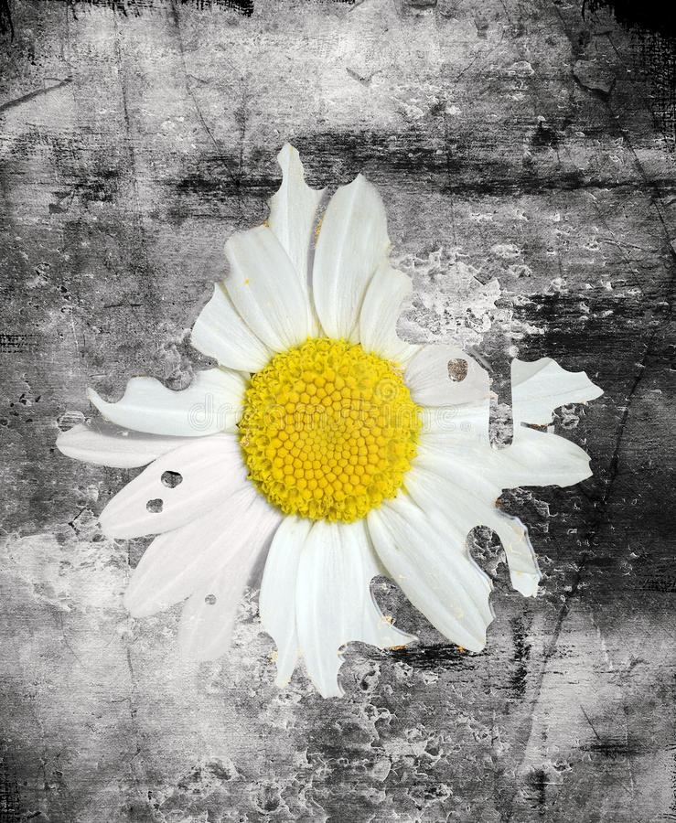 Daisy in de asfalt digitale illustratie stock illustratie