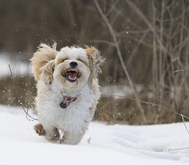 Daisy Dog immagini stock libere da diritti