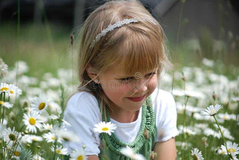 daisy dreamin obrazy stock