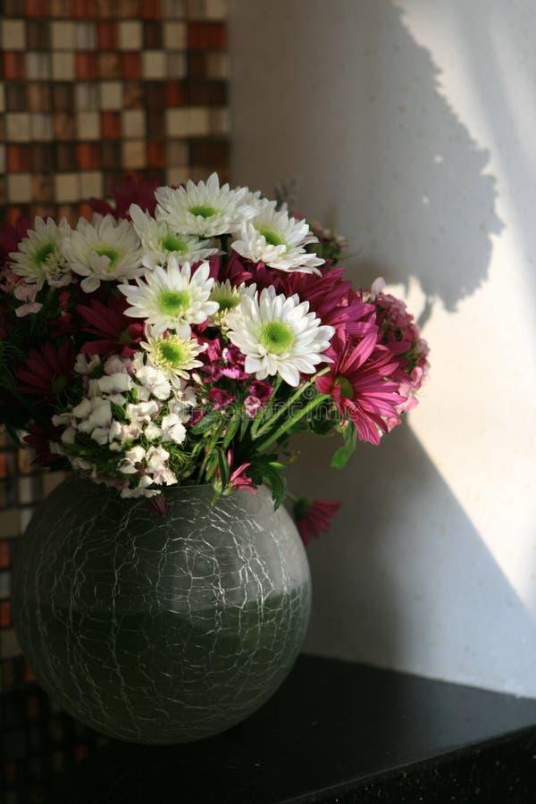 Daisy in een vaas stock afbeeldingen