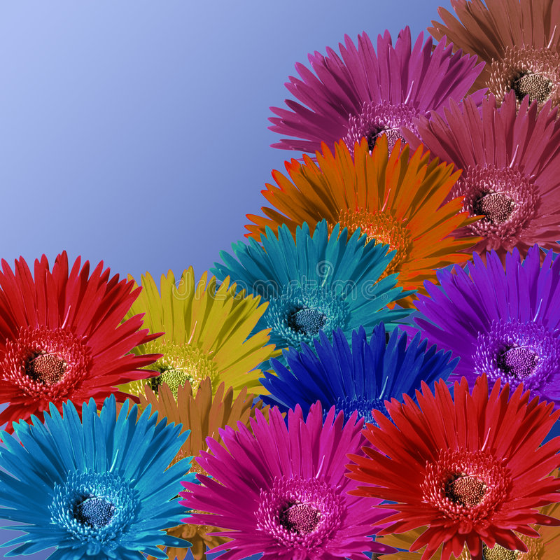 Download Daisy Field stock image. Image of color, multycolor, aranged - 85977