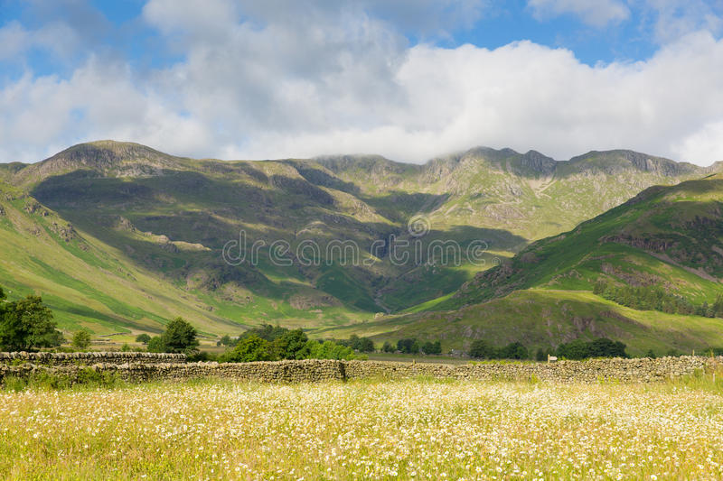 Daisy field mountains blue sky and clouds scenic Langdale Valley Lake District uk. Daisy field with mountains blue sky and clouds scenic Langdale Valley Lake royalty free stock images