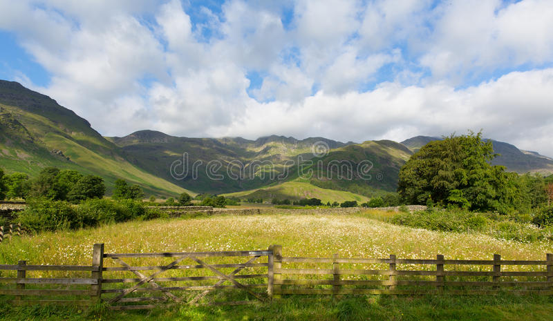 Daisy field mountains blue sky and clouds scenic Langdale Valley Lake District uk. Daisy field with mountains blue sky and clouds scenic Langdale Valley Lake stock photography