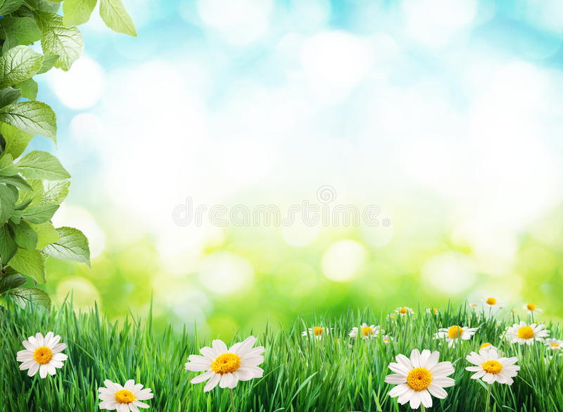 Daisy field in the sunny summer day. royalty free stock photography