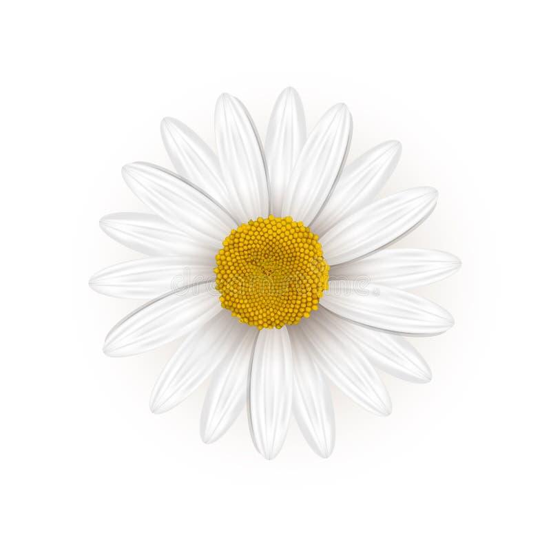 Daisy Flower royalty-vrije illustratie