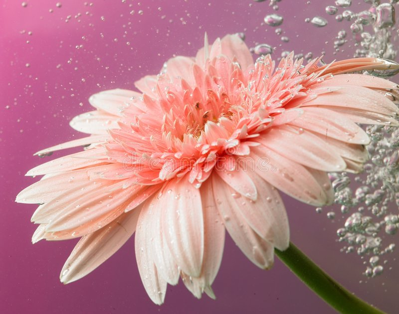 Download Daisy flower stock image. Image of beautiful, blooming - 5244151