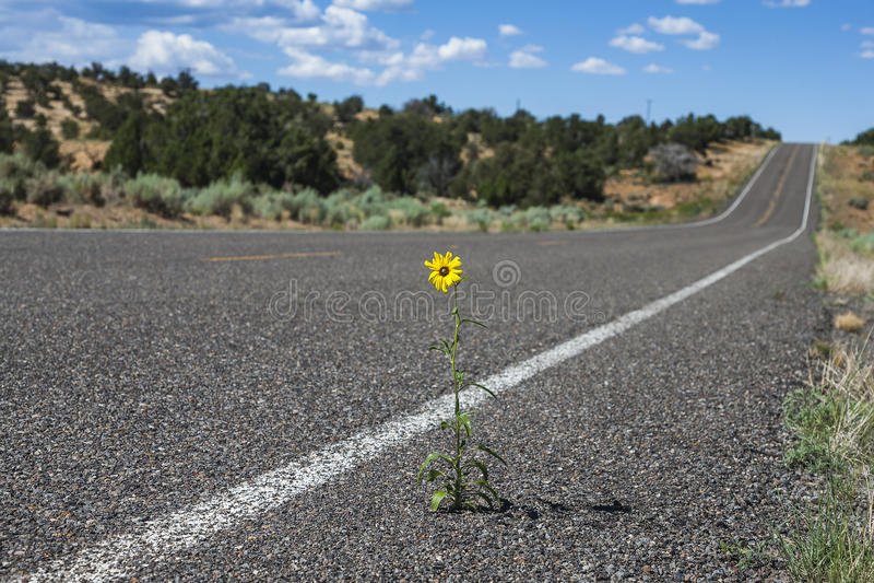 Daisy Flower amarilla fuerte imagenes de archivo