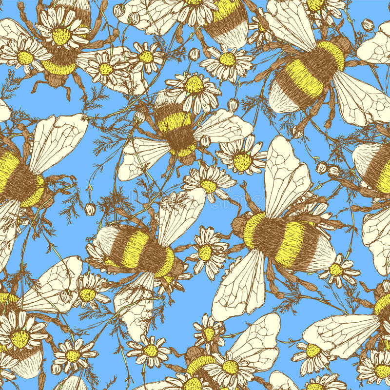 Daisy flower and bees vector illustration