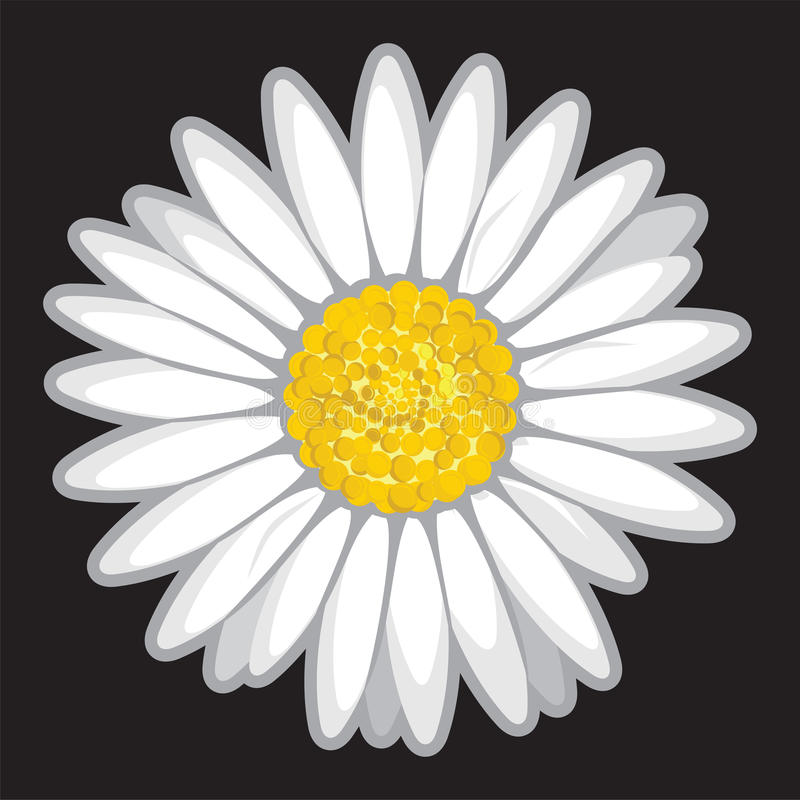 Daisy Flower  On Black Stock Image