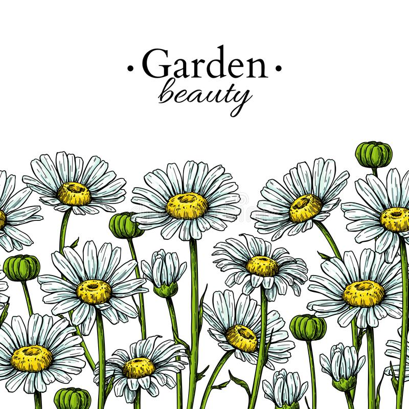 Daisy flower border drawing. Vector hand drawn floral seamless pattern. Chamomile. Black ink frame sketch. Wild botanical garden bloom. Great for tea packaging stock illustration