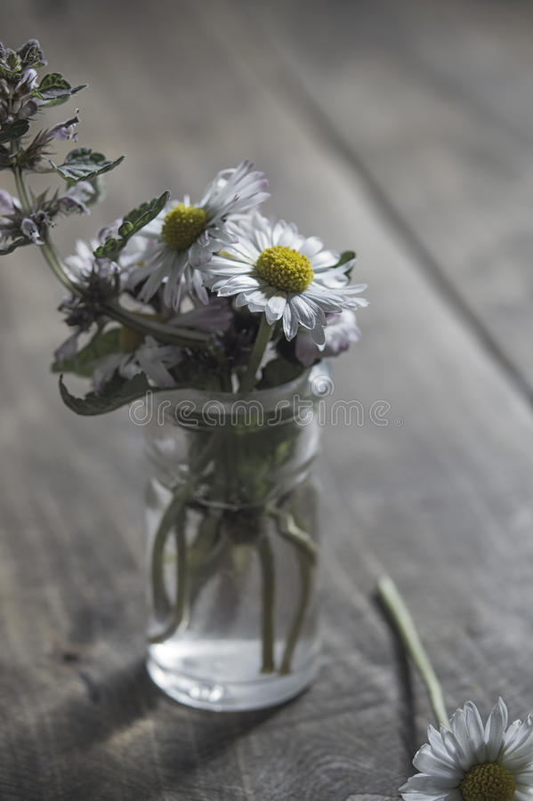 Daisy flower in glass jar. On wooden background stock photography