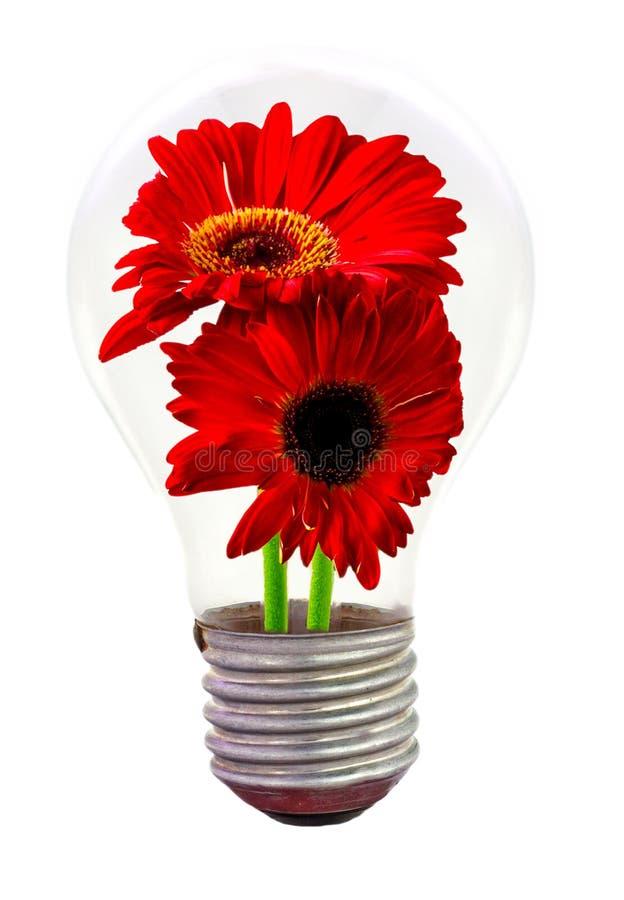 Download Daisy Flower Inside The Light Bulb Stock Image - Image: 24509693