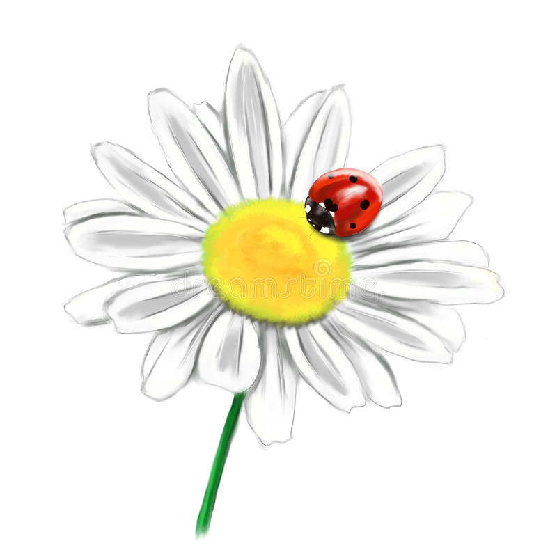 Daisy flower with ladybird illustration royalty free stock photos