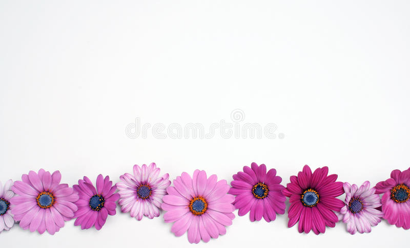Download Daisy flowers stock image. Image of colours, daisies - 13954575