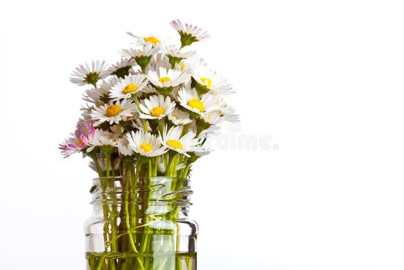 Daisy Flowers stock afbeeldingen