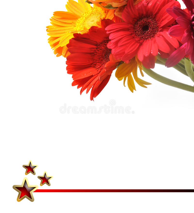 Daisy flowers. Red yellow daisy flowers on white background - like greeting card royalty free stock image