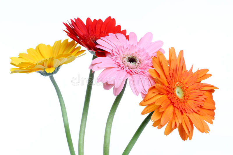 Download Daisy flowers stock photo. Image of detail, nature, abloom - 22571940