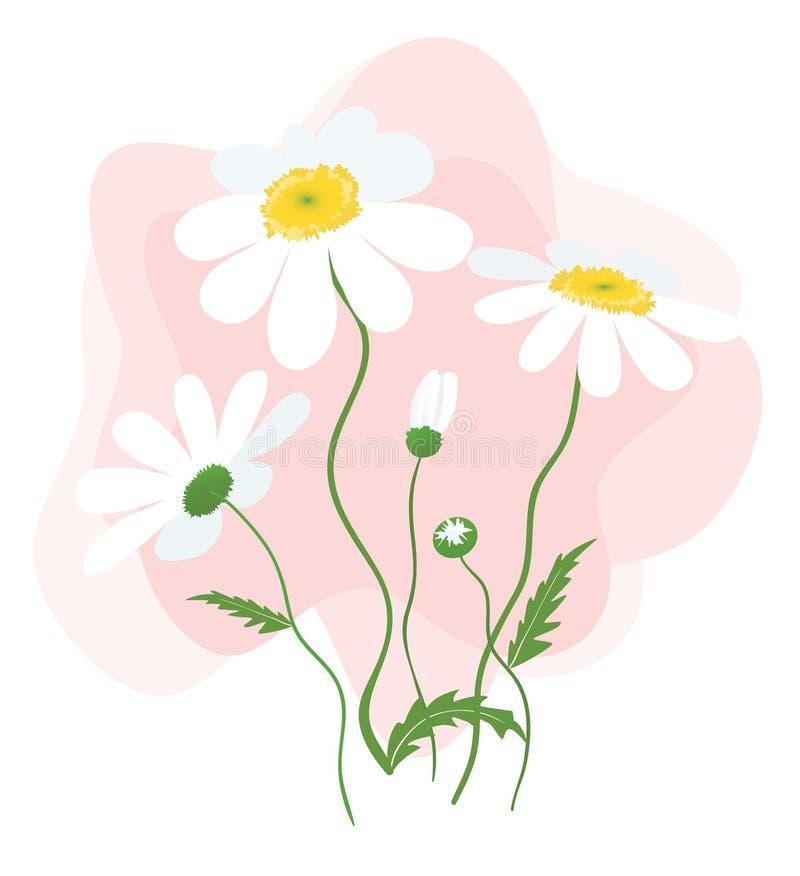 Daisy Flowers illustration libre de droits