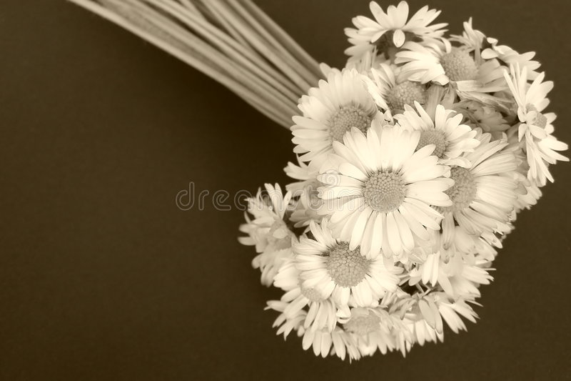 Download Daisy Flowers Royalty Free Stock Photos - Image: 5019228