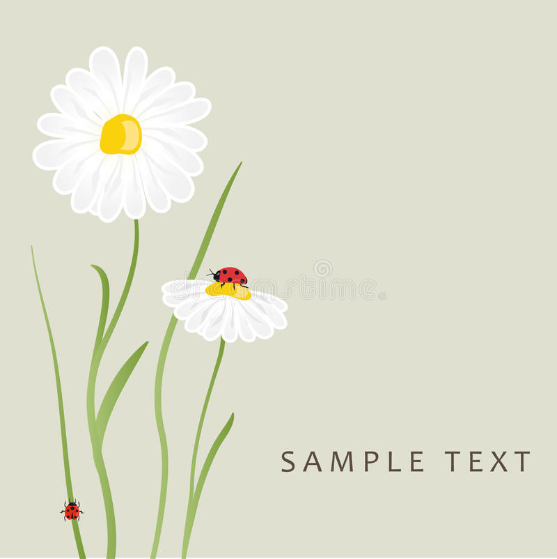 Free Daisy Flowers And Ladybug. Vector Card Stock Photos - 15954363
