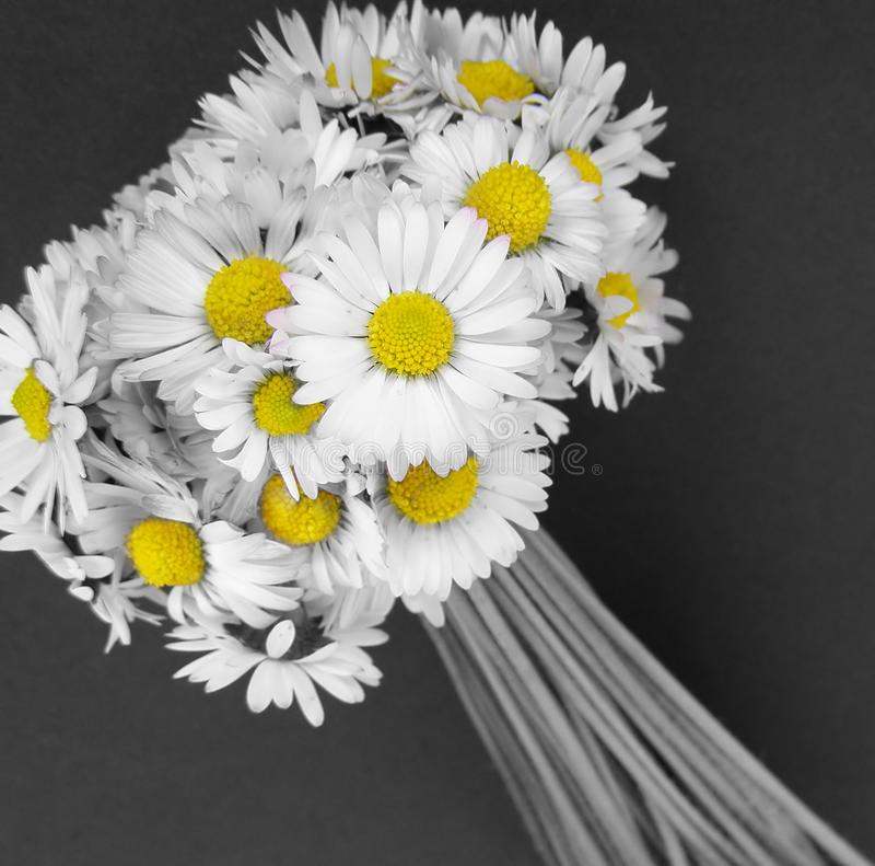 Daisy flowers bouquet stock image