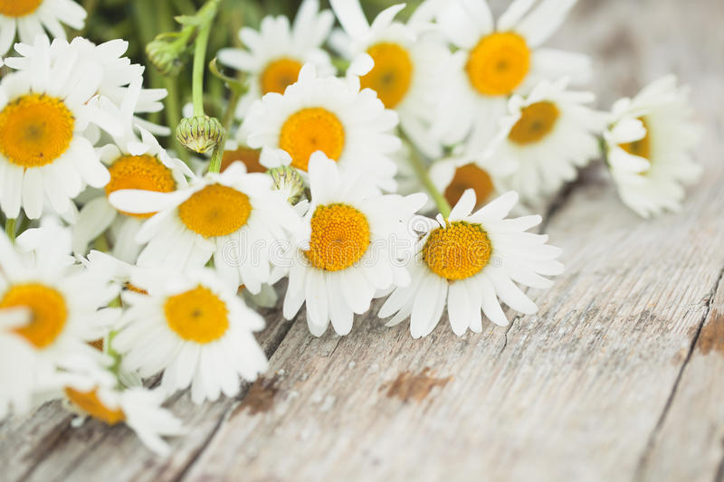 Daisy flowers. Bouquet of beautiful daisy flowers on wooden desk stock image