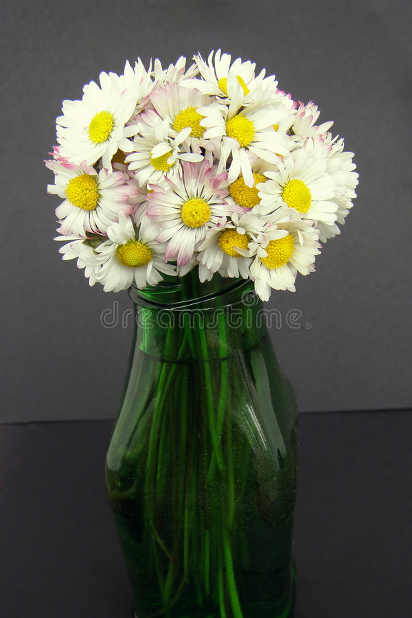 Daisy Flowers Bouquet In A Vase Stock Image - Image of glass ...