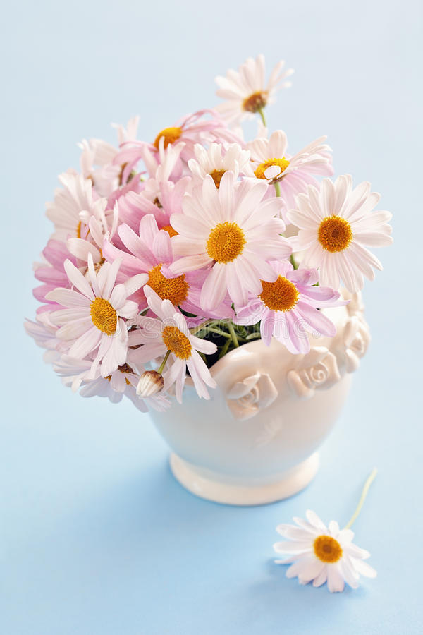 Daisy flowers royalty free stock images