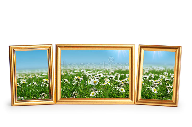 Download Daisy Flowers In The  Frames On White Stock Image - Image: 22558519