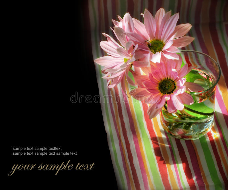 Download Daisy flowers in glass stock photo. Image of copyspace - 25039302