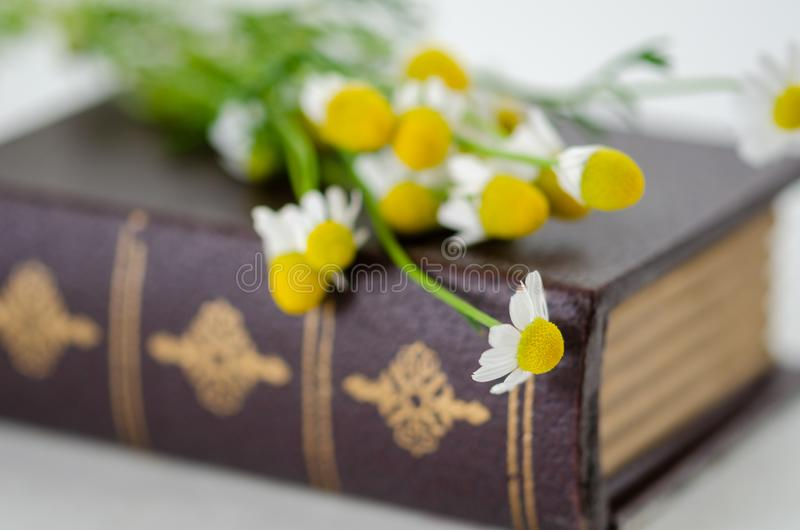 Daisy flowers on hardcover book royalty free stock image