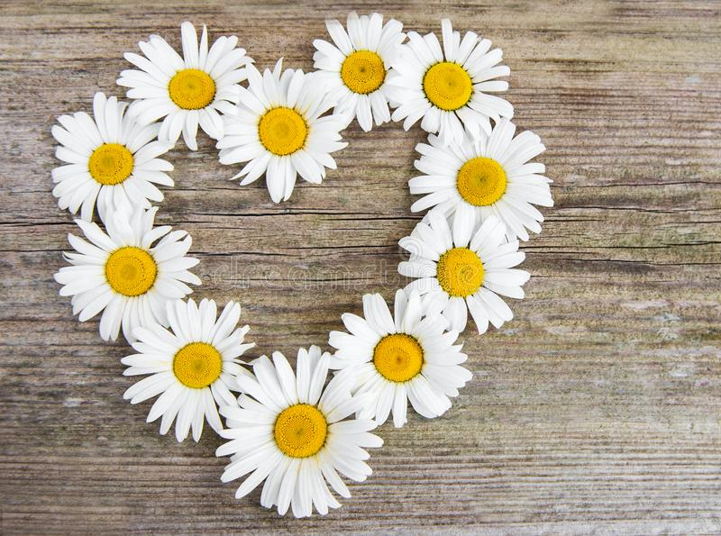 Daisy flowers in heart shape. On a old wooden background stock photos