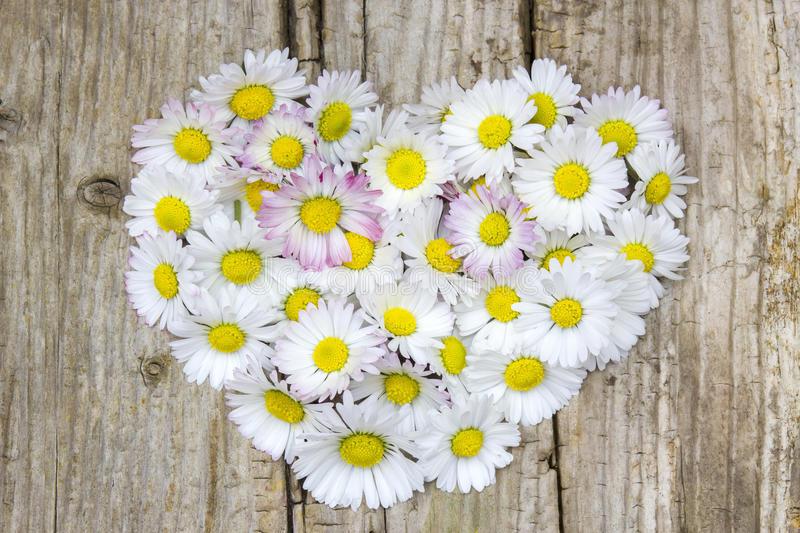 Daisy flowers in heart shape. On wooden background royalty free stock photo