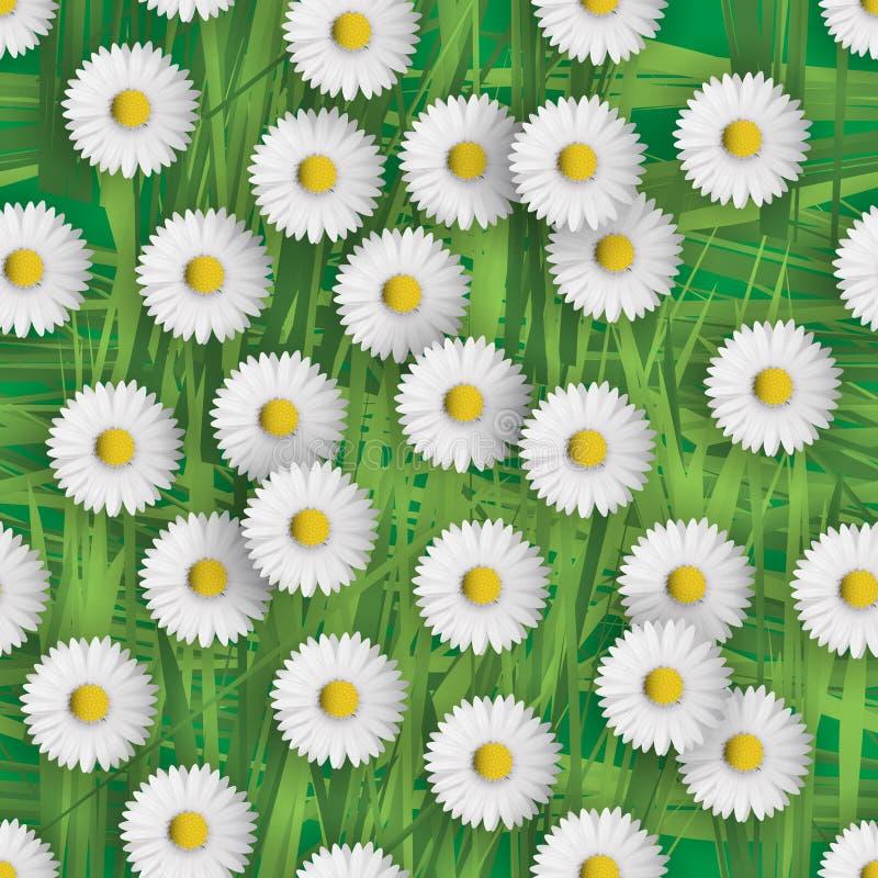 Daisy flowers royalty free illustration